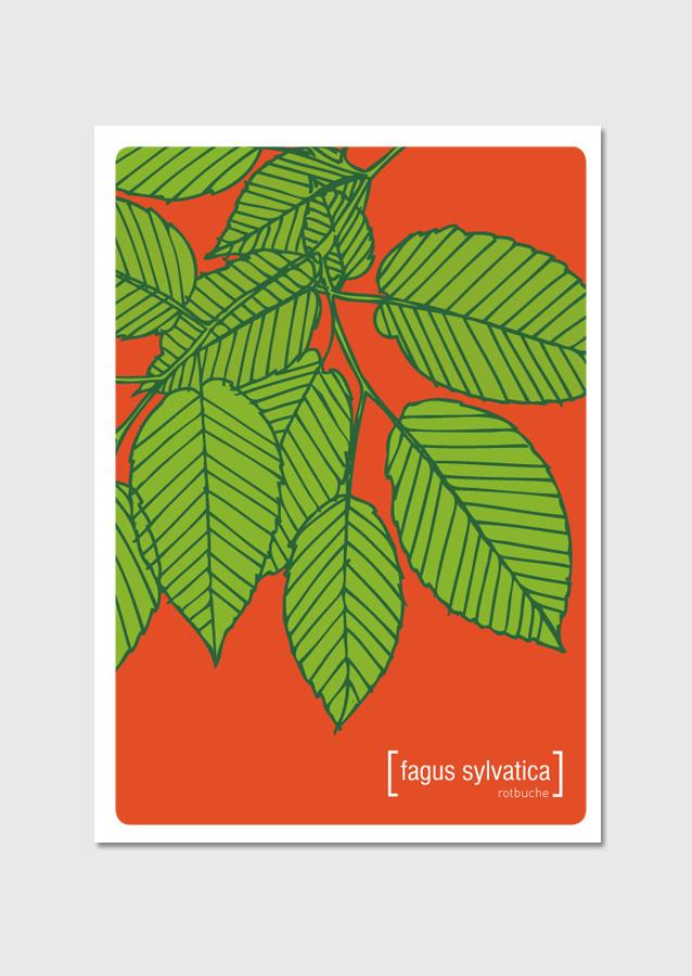 Postkarte Fagus Sylvatica
